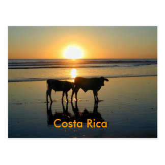 Postcard Bejuco Cow Country, Costa Rica