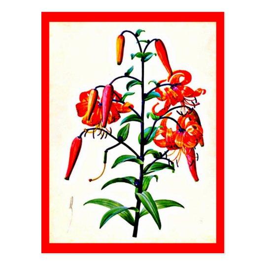 Postcard-Botanicals-Pierre Joseph Redoute 4 Postcard