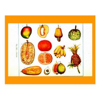 Postcard-Botanicals-Yellow & Orange Fruits Postcard