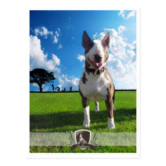 Postcard bull terrier