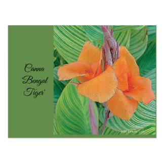 """Postcard - Canna """"Bengal Tiger"""""""