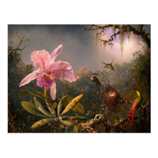 Postcard: Cattleya Orchid & Three Hummingbirds Postcard