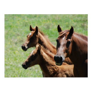 Postcard - Chestnut Mare & Foals