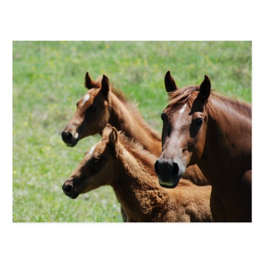 Postcard - Chestnut Mare & Foals