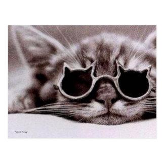 Postcard Coolest Cat alive