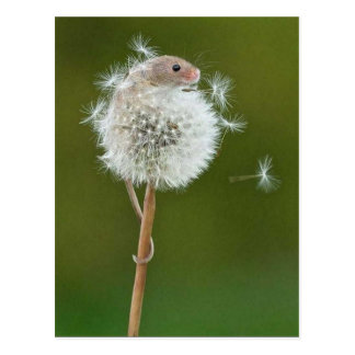 Postcard - Field Mouse & Dandelion