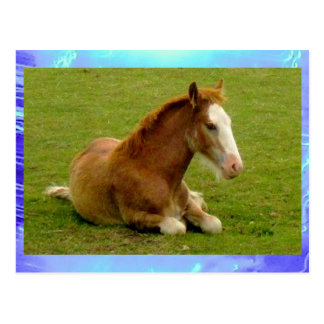 Postcard - Foal in a field