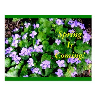 Postcard for Spring
