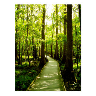 Postcard - Forest Path