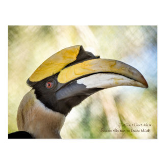 Postcard: Great Hornbill 4 Postcard