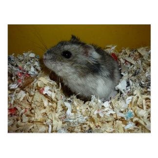 Postcard Hamster
