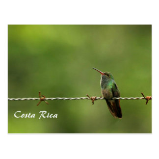Postcard Hummingbird Costa Rica