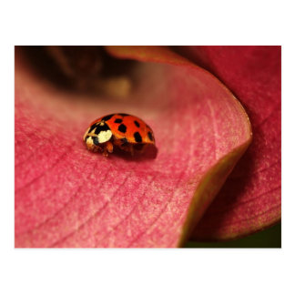 Postcard-Insects-The Lady Bug Postcard