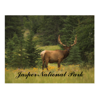 Postcard - Jasper National Park