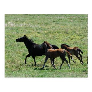 Postcard - Mare & Foals Running