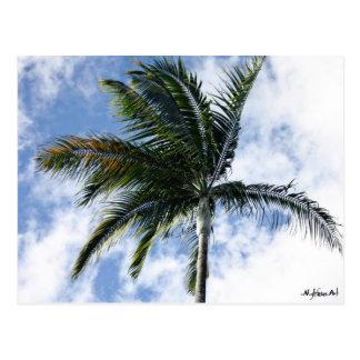postcard mylifeisart palm tree