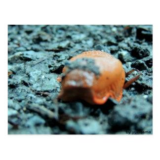 Postcard - naked snail II