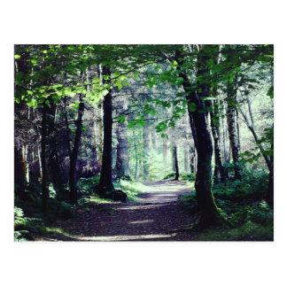 Postcard of a Woodland walk in Scotland.
