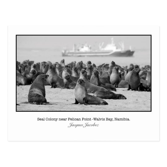 Postcard of Seal Colony