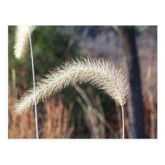 Postcard of swamp grass