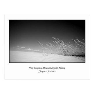 Postcard of wild grasses on dune.