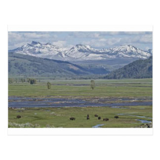 Postcard of Yellowstone National Park