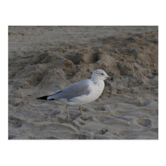 Postcard PHOTOGRAPH OF MR. SEAGULL