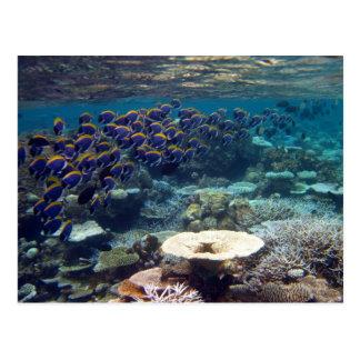 Postcard - Powder Blue Surgeon Fish