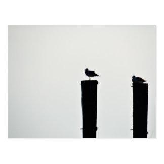 postcard seagull
