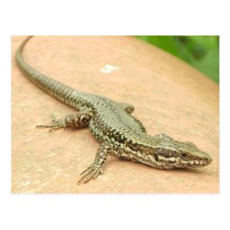 Postcard Small lizard