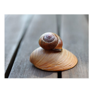 Postcard snail and shell