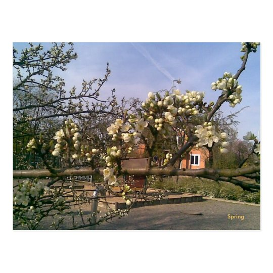 Postcard Spring