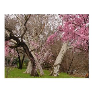 POSTCARD - Springtime in Chico, CA