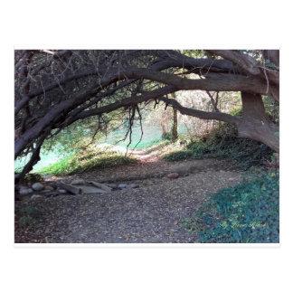 Postcard strolls under wood