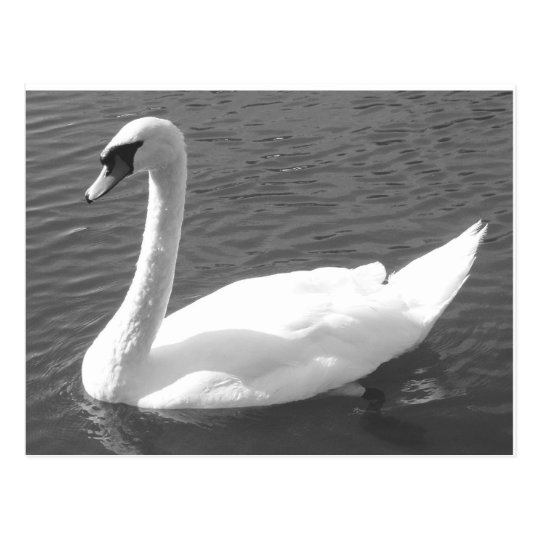Postcard - Swan in Black & White
