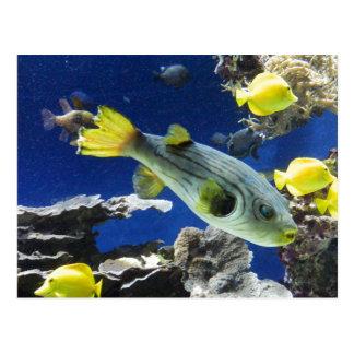 Postcard Under the sea