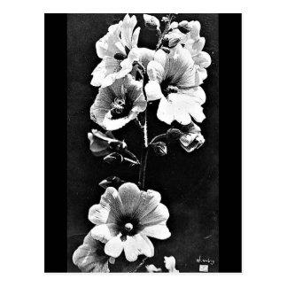 Postcard-Vintage Photography-Charles Aubry 23 Postcard