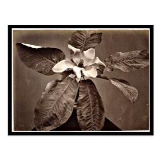 Postcard-Vintage Photography-Charles Aubry 24 Postcard