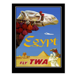 Postcard Vintage Travel Egypt Camel