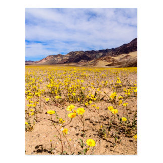 Postcard Wildflowers in Death Valley NP-V