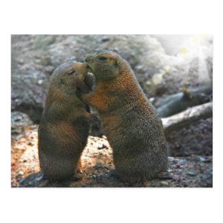 Postcard with cute marmot couple