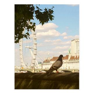 Postcard with Pigeon admiring London Eye