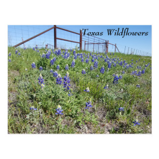 Postcard with Texas Wildflowers