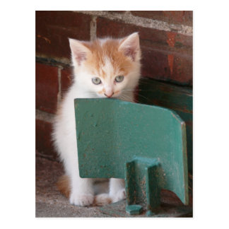 "Postcard ""young cat """