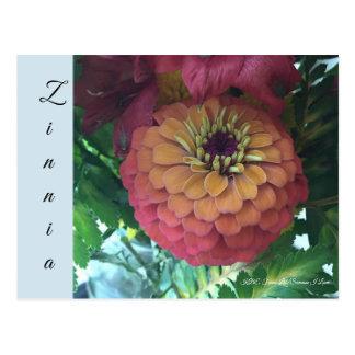 Postcard - Zinnia