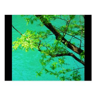 Postcards-City Flowers-10