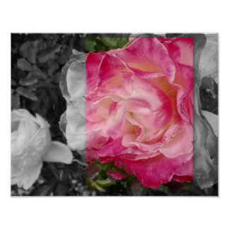 POSTER 11x14, PINK Flower