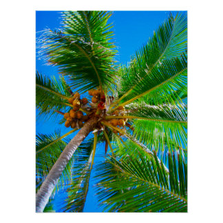 """Poster  (18"""" x 24"""")  Palm Tree Vanuatu"""