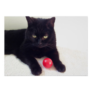 Poster Cat with a red ball by Billy Bernie