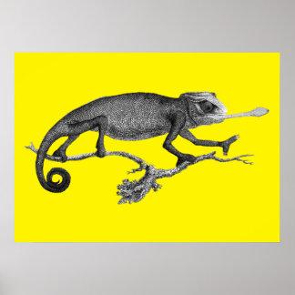 Poster Chameleon vintage illustration